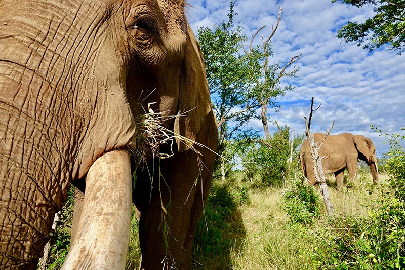 elefant-nah-simbabwe-zorillafilm-grospitz-westphalen