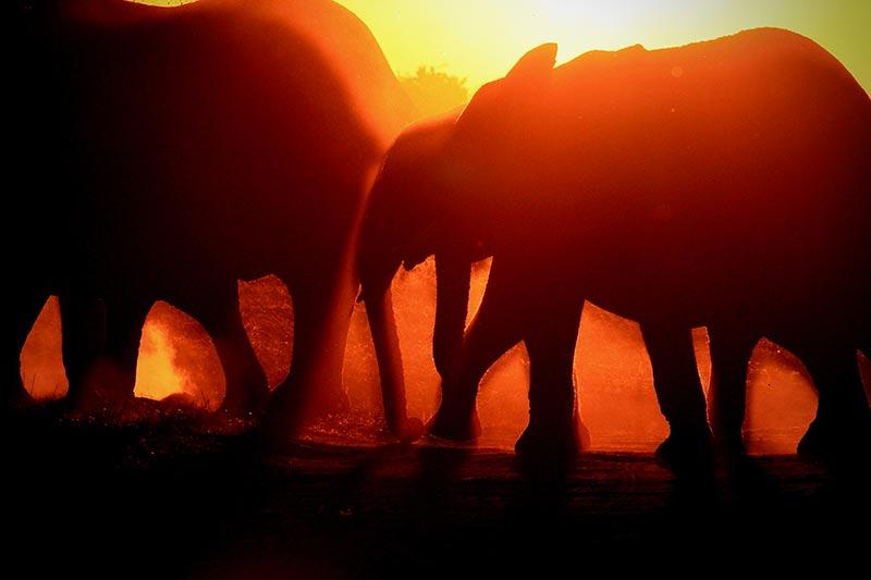 elephants-sunset-botswana-zorillafilm-grospitz-westphalen