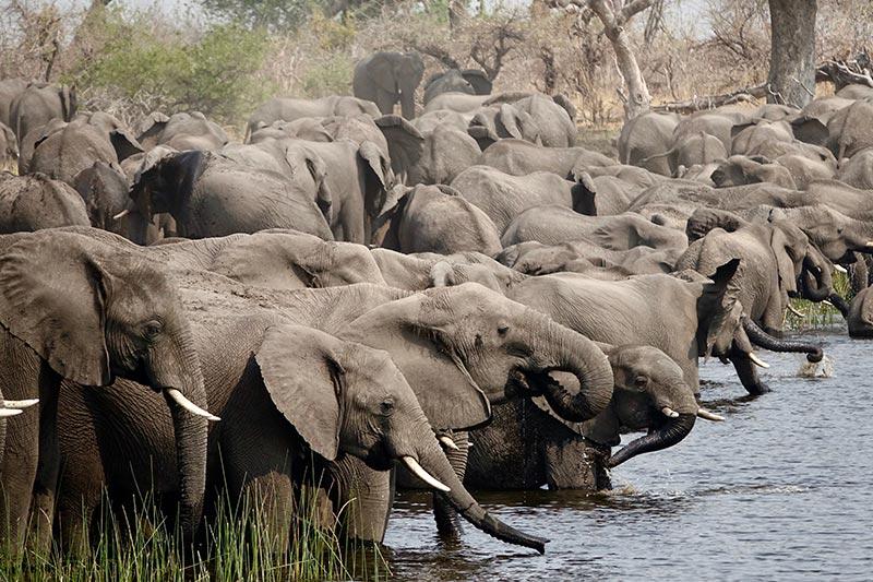 elphants-drinking-namibia-zorillafilm-grospitz-westphalen