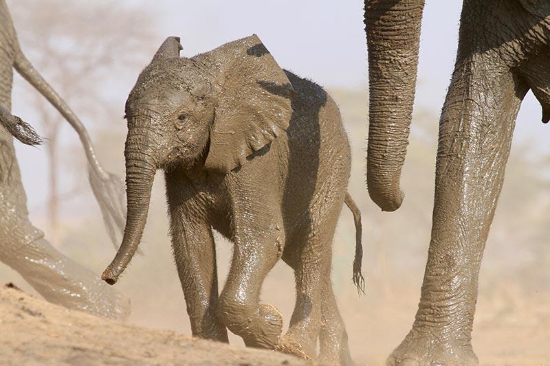 little-elephant-botswana-zorillafilm-grospitz-westphalen