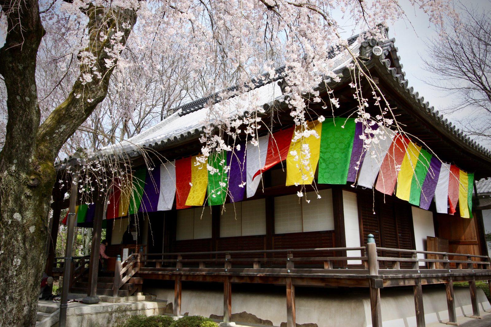 Daigoji Kyoto Japan Kirschblüte Zorillafilm