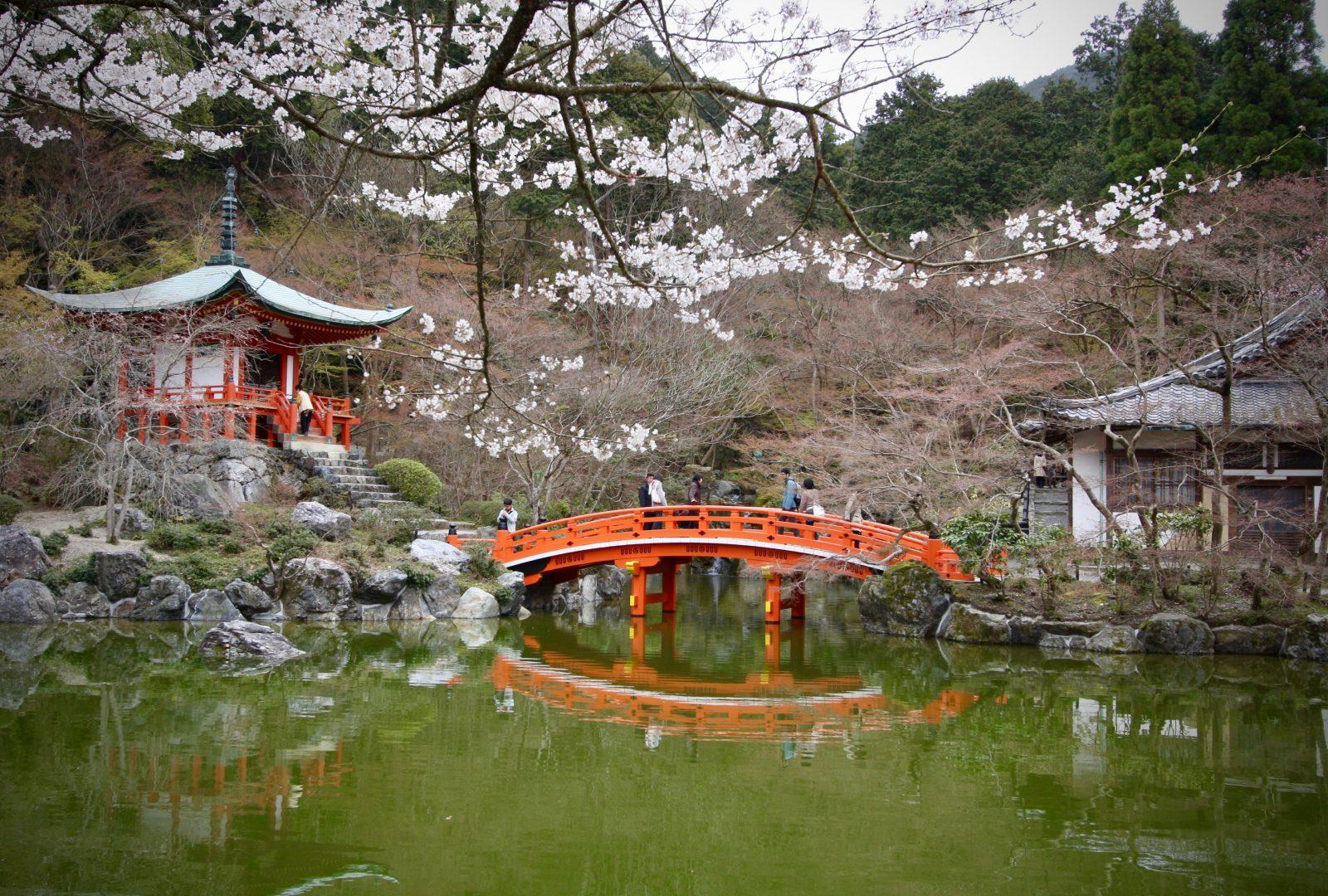 Kyoto Japan Kirschblüte Zorillafilm