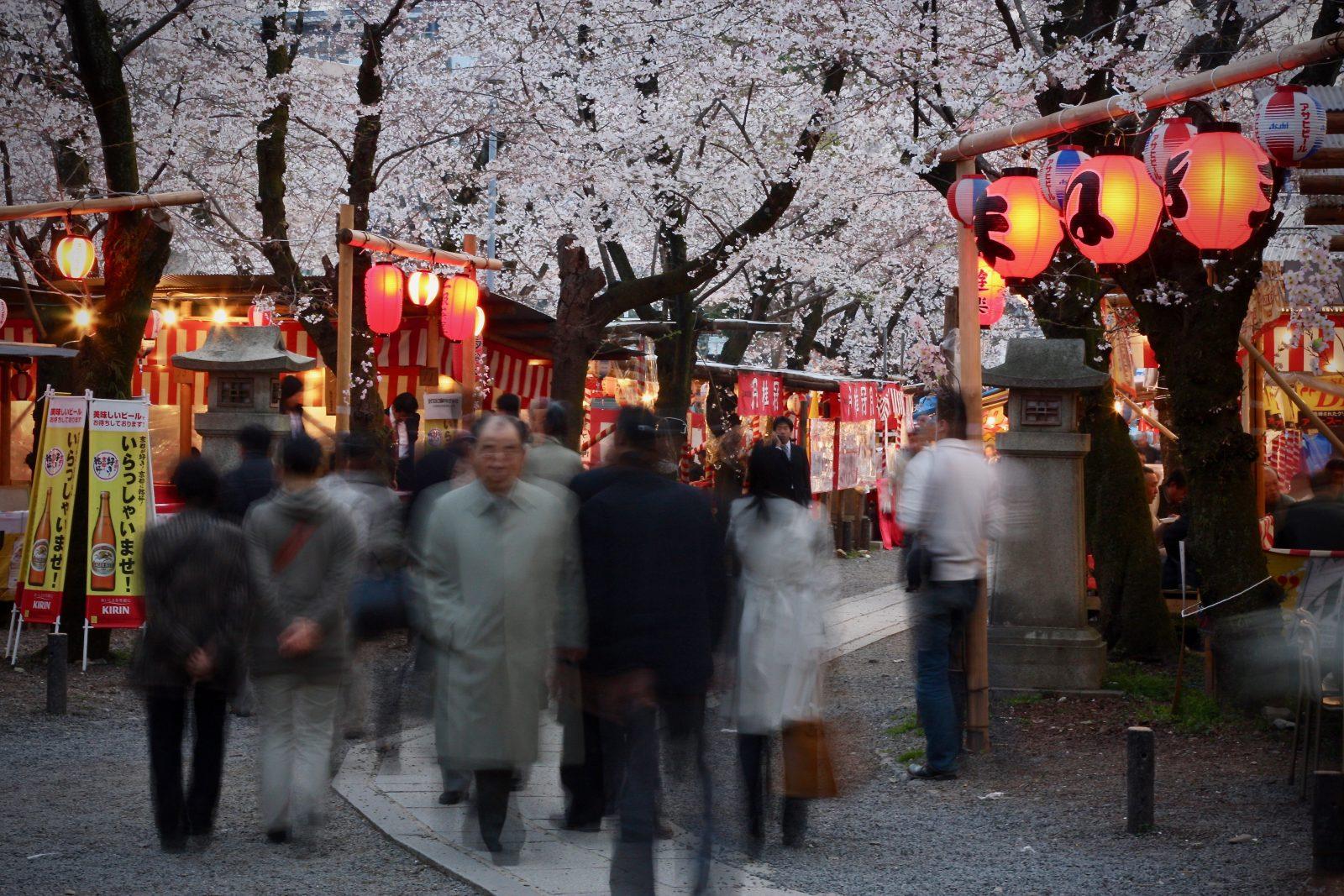 Kirschblüte Japan Zorillafilm