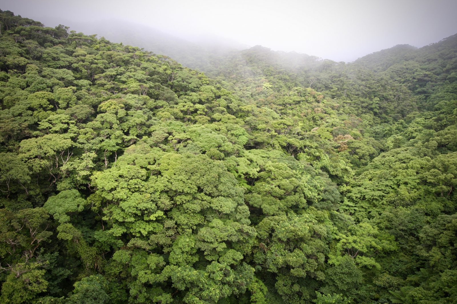 Regenwald Okinawa Japan Zorillafilm Grospitz Westphalen